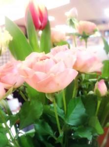春の花_2